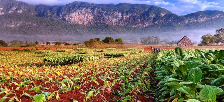 Viñales Pinar del Río Cuba