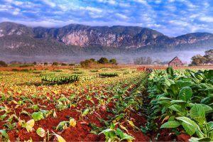 Tabaksplantage in Vallei van Viñales